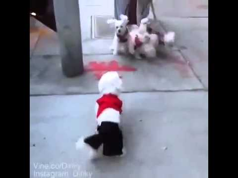 Dinky Dog vine – The Real Slim Shady