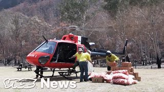 australia-is-dropping-veggies-from-helicopters-for-starving-wallabies