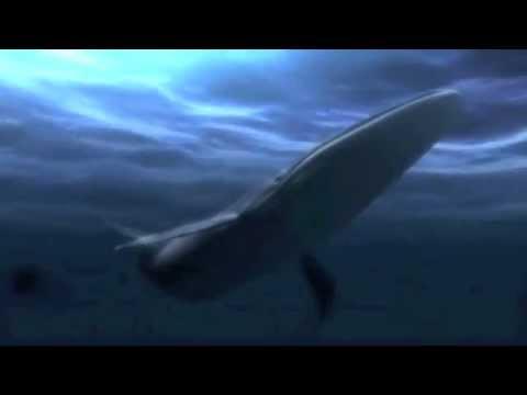 Blue whale birth - photo#3