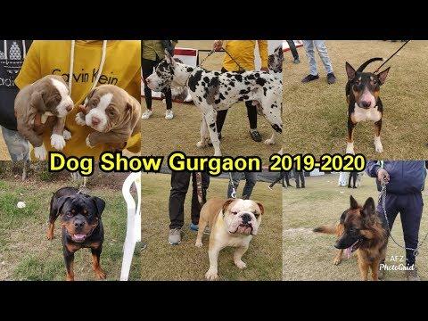Dog Show Gurgaon 2020 || KENNEL CLUB OF INDIA || GURUGRAM KENNEL CLUB