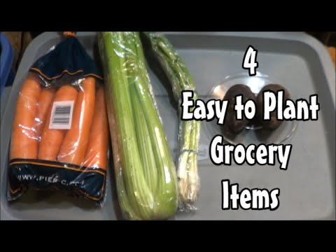 4 Easy to Plant Grocery Items