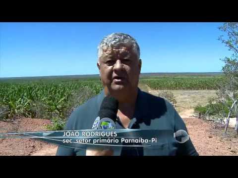 Com a maior área irrigada do Piauí, Guadalupe se destaca na fruticultura
