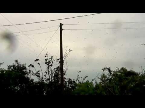 Incrível: Chuva de ARANHAS no Paraná?