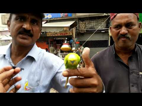 Kabutar Market In Karachi Videos 2018