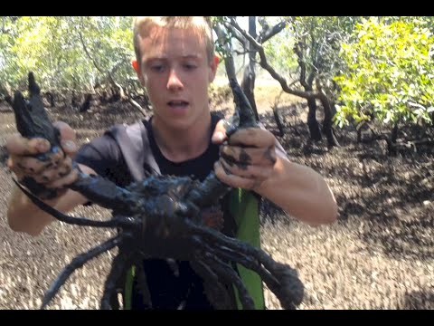 BACON OF THE SEA - Mud Crabs caught BAREHANDED - Catch n Cook   TDB