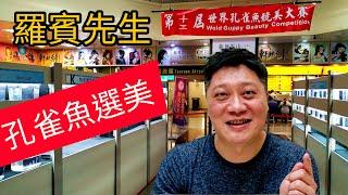 【羅賓先生】2019世界孔雀魚競美大賽 台北捷運地下街 Y19 world guppy beauty competition in Taipei Taiwan thumbnail