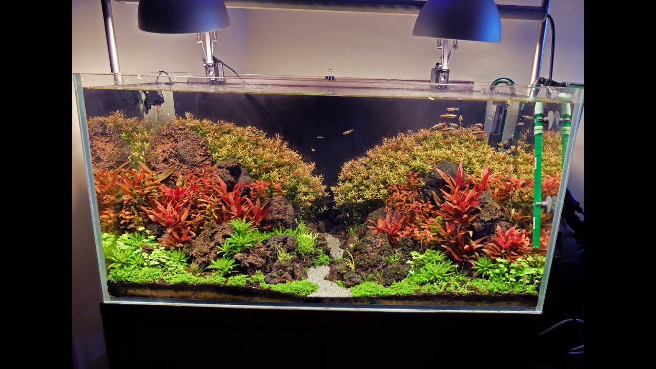 Aquarium lighting for plants - Advanced Guide To Lighting A Planted Tank Basics First