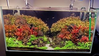 Advanced guide to lighting a planted tank - Basics first