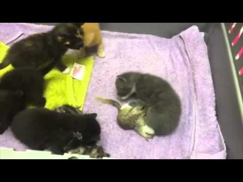 Mama cat nurses baby squirrel