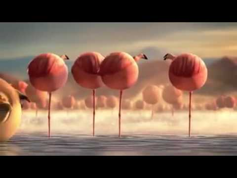 Мультфильм о животных которые не успели похудеть к лету