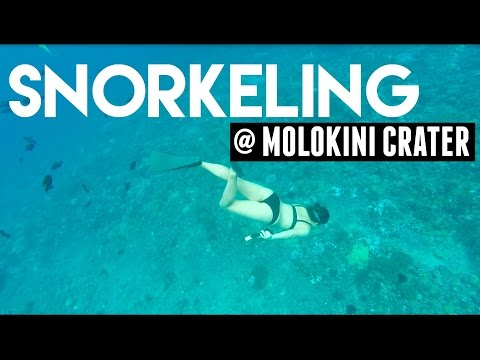 VLOG: Snorkeling at Molokini Crater! (12/28/15) | ALJOing