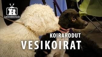Koirat: Vesikoirat rotuesittely