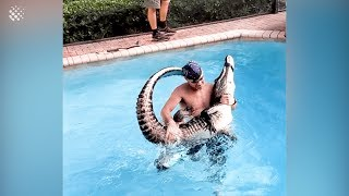 Man carries nine-foot alligator like a baby after wrestling it in family pool.