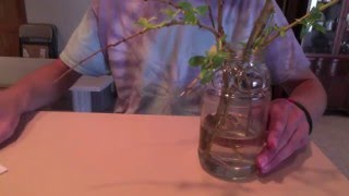 How to Grow a Weeping Willow Bonsai
