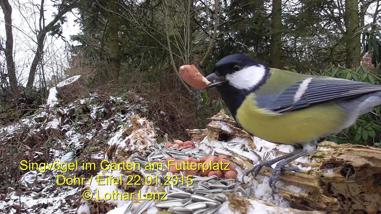 Singvögel Im Garten : singv gel im garten am futterplatz dohr eifel youtube ~ Whattoseeinmadrid.com Haus und Dekorationen