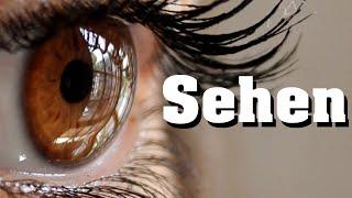 Sehen - Sehvorgang schnell erklärt!
