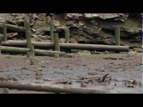 Duwamish River: An Industrial Tour