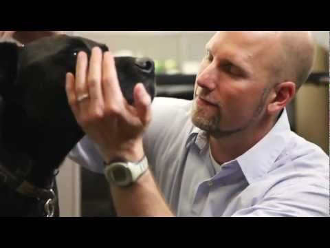 Preventing Deafness in your Dog or Cat