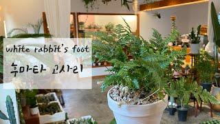 공기정화능력이 뛰어난 식물 후마타 고사리 키우기