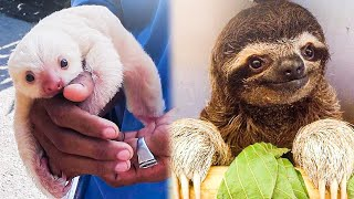 Cutest Animals 🐶 Best Of The Cute Animal Videos 😁 | Funniest Animals Ever!