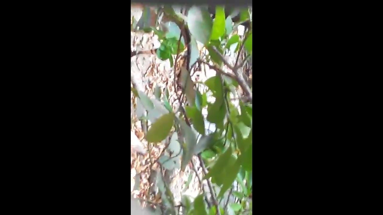 Catfight At Backyard Youtube
