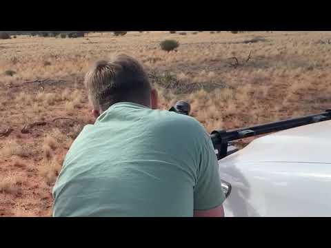 Camel hunting