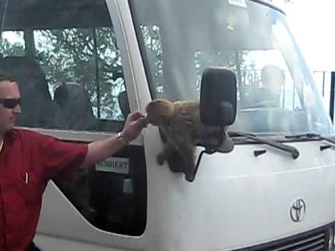 Barbary Ape on tour bus