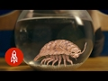 A Mysterious Hungry Creature of the Deep | The Aquatic World with Philippe Cousteau