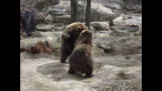 Passeando no zoológico do Bronx