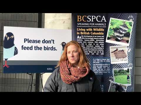 pigeon-birth-control-pilot-project