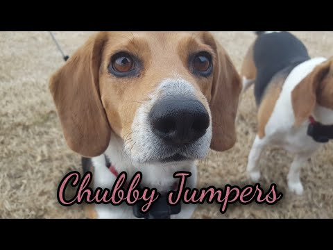 Dog Edit!   Chubby Jumpers