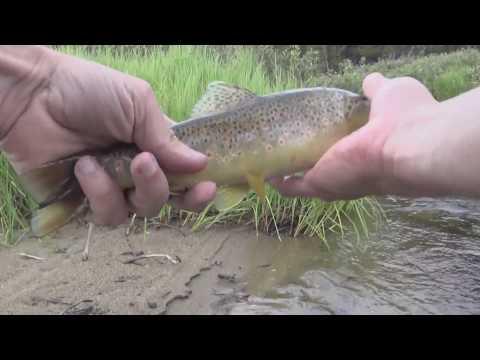 Fishing Colorado, fly fishing Tennessee Creek
