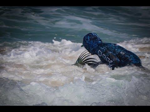 Surffishing For Rooster Fish, Puerto Vallarta, Mex.