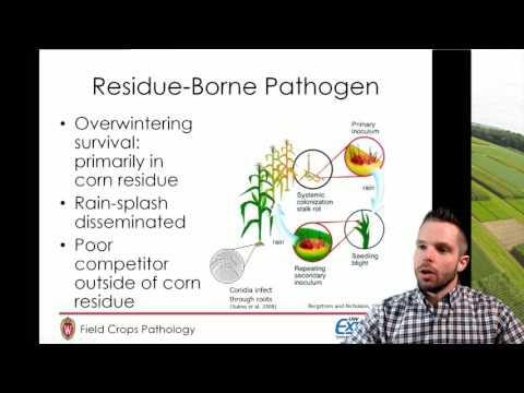 Disease Management in Low Margin Years, Field Crops