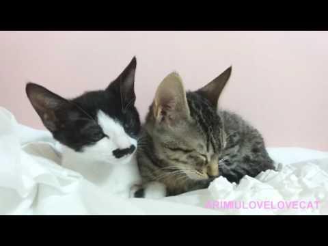 그루밍하고 숨바꼭질 하는 고양이 cats play Hide and seek Ep 61