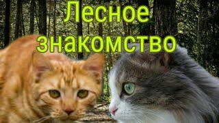 """Коты-Воители 2 серия""""Лесное знакомство"""""""
