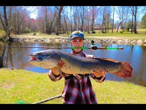 MONSTER Bowfin Caught (Early Spring Fishing Tips)