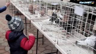 На выставку птиц в Керчь приедут краснодарские голубеводы