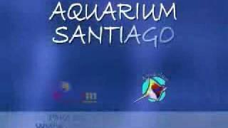 SPOT AQUARIUM El Yeti Productora Thumbnail