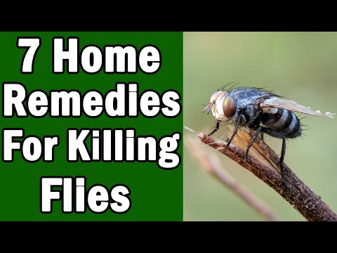 7 Home Remedies For Killing House Flies