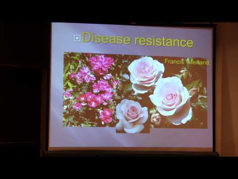 ARS Convention 2012 Fall - Breeding for Fragrance - Tom Carruth