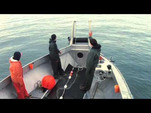 Alaska Fish Wars on Nat Geo Wild HD (ch 356)