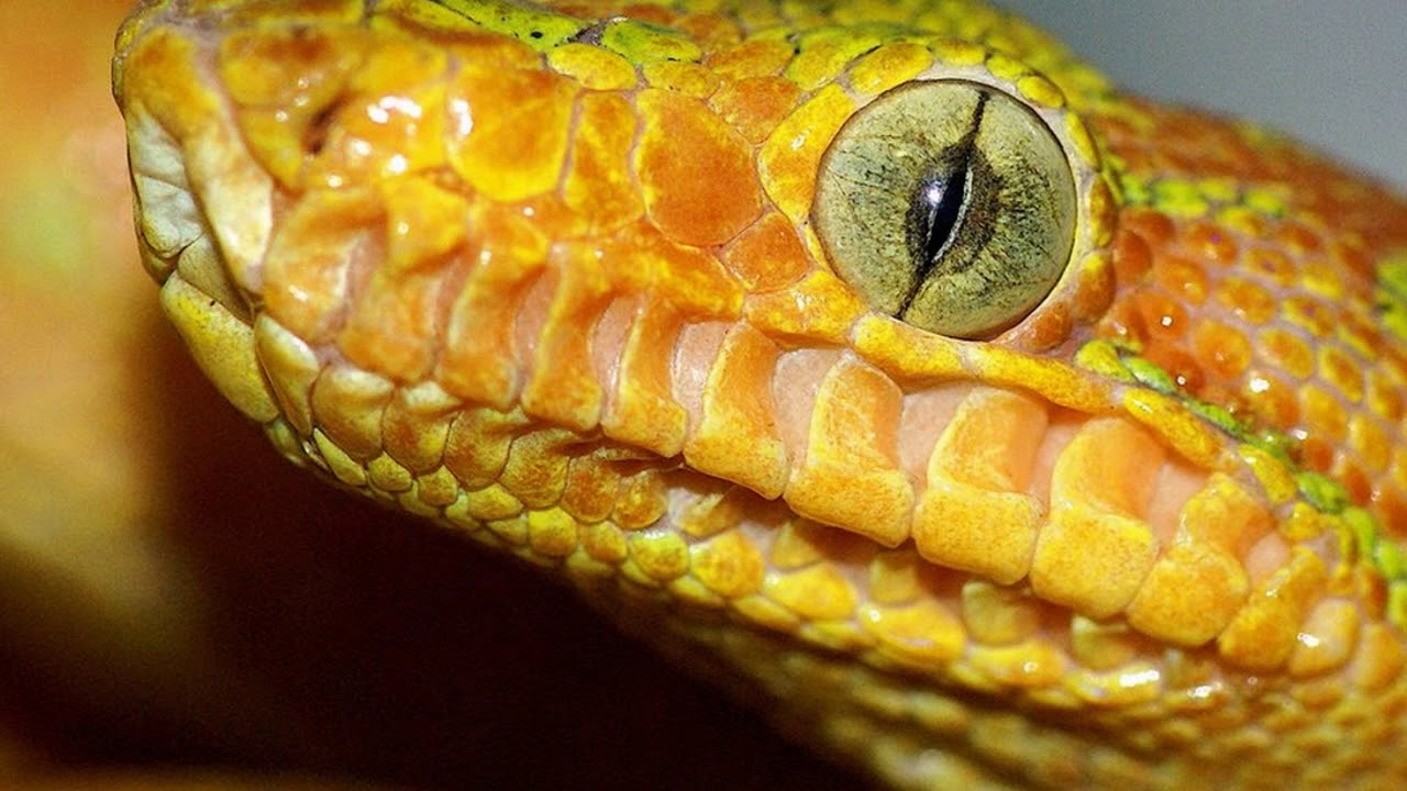 DIFFERENT TYPE OF SNAKES IN THE WORLD- Snake species from ...