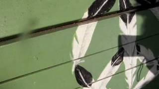 MVI 4412 sassy seats church willow glen san jose california