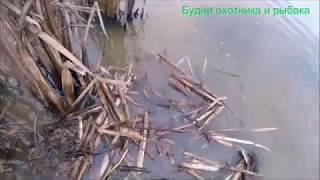 Охота на ондатру мордами установка на норе