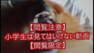 もっと熱いぞ!猫ヶ谷!! 3D 2012 映画チラシ 2012年1月14日公開 【映...