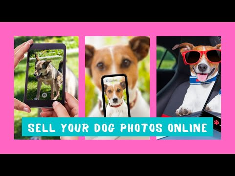 sell-your-dogs-photographs-online
