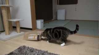 被るねこ。-Maru puts a paper bag on his head.-