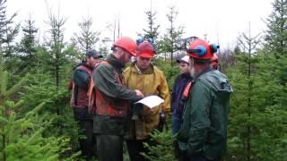 Comment aménager un ravage (aire de confinement) de cerf de Virginie (FPFQ)