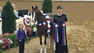 Emma Wolfe at Region 15 Arabian Halter